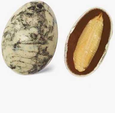 Spécialites chocolat amandes - Galéo gianduja